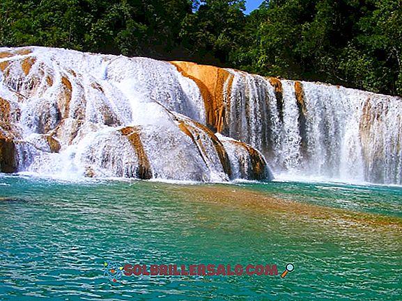 Care sunt componentele sociale ale Chiapas?