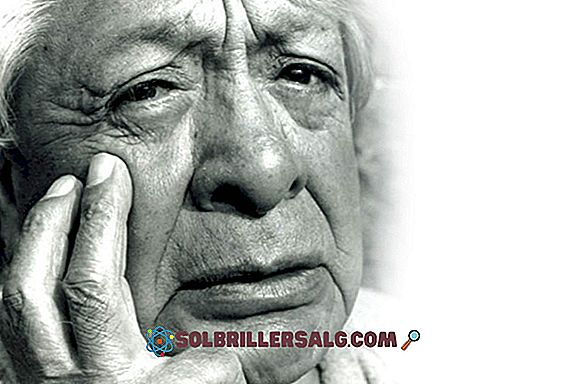 Marcello Malpighi: Biografia, contributi e opere