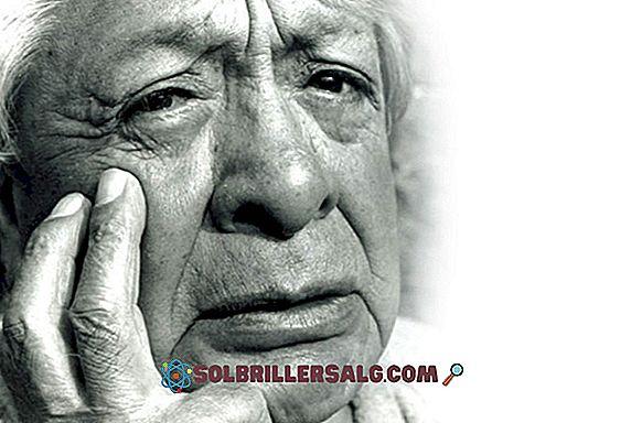 Marcello Malpighi: Biografi, Bidrag och Works