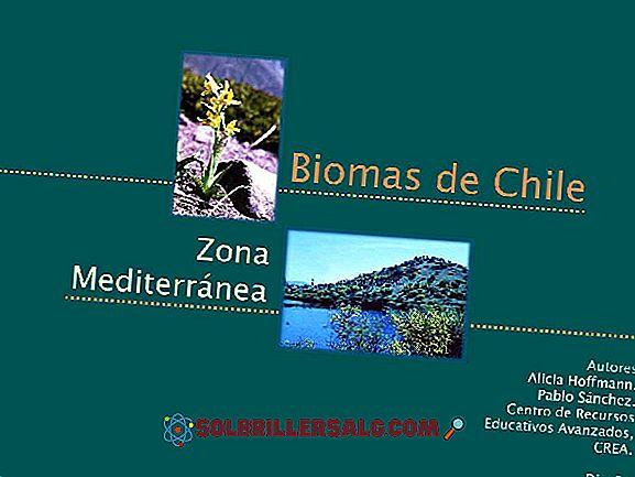 economie - Zona centrală din Chile: climă, floră, faună, resurse și economie
