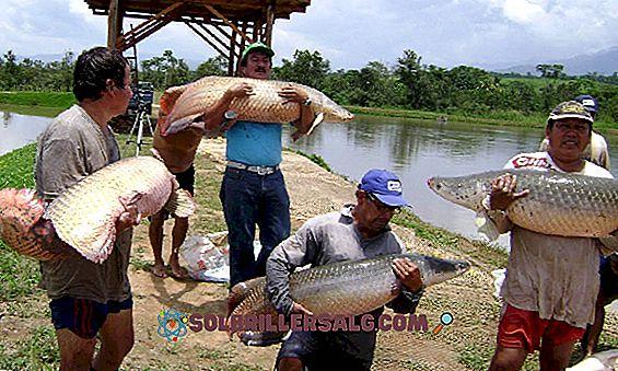 7 Den peruanske jungelenes økonomiske aktiviteter