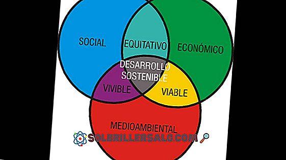 Responsabilidade Ética: Significado, Exemplos