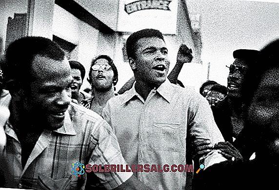 100 najlepszych fraz Mohammeda Ali