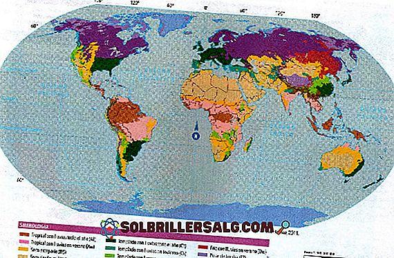 Dünyanın 8 Doğal Bölgesi ve Özellikleri