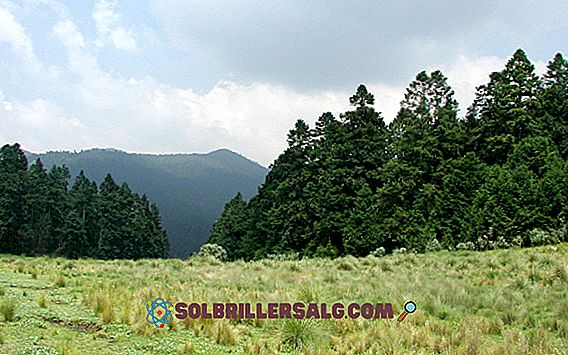 Tropikal Orman: Özellikleri, Çeşitleri, Flora, Fauna