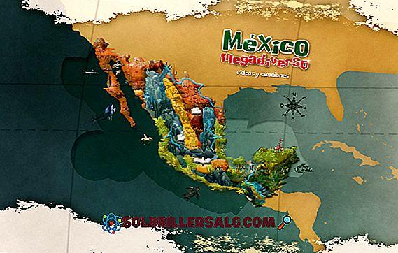 geografia - Che cosa significa Megadiverse?