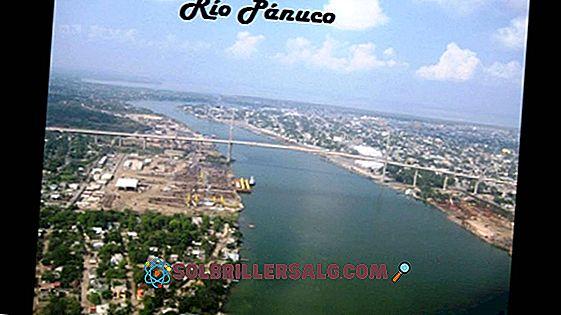 3 Sungai Paling Penting di Cundinamarca