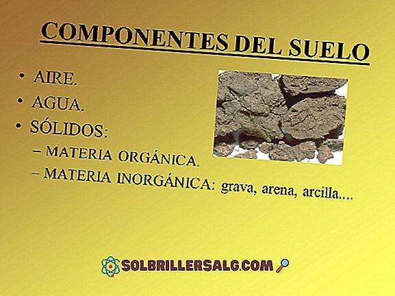 Qual è la composizione del suolo?