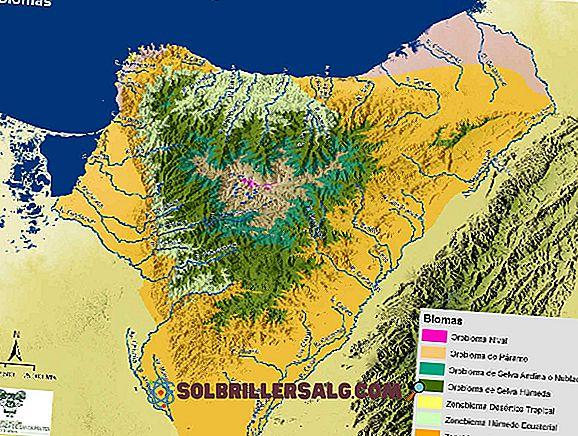 Foresta spinosa: caratteristiche, flora, fauna, clima