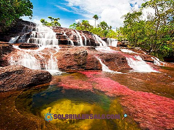 Apa Sungai Paling Penting di Kolombia?