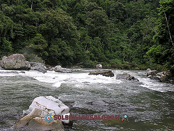 Hidrografi Venezuela: Hidrografi Cekungan dan Sungai
