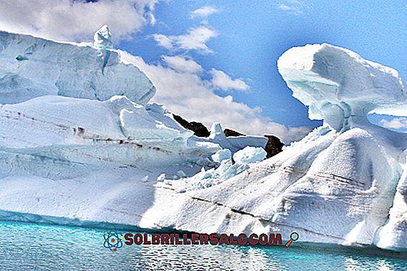 geografia - Ecosistema Tundra: caratteristiche, flora, fauna, posizione