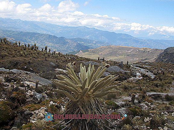 Istoria Regiunii Andine Sud-Americane: Caracteristici principale