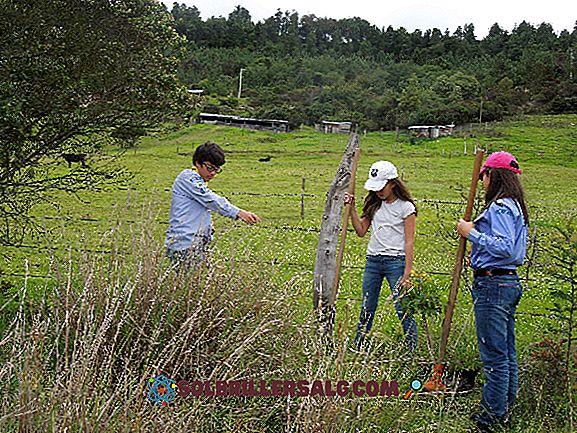 أهمية إنشاء غران كولومبيا: 4 أسباب رئيسية