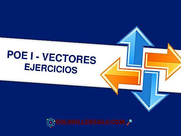 Prostokątne elementy wektora (z ćwiczeniami)