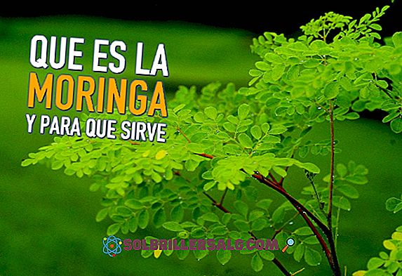 Hierba del Manso: Fördelar, kontraindikationer och hur man tar det