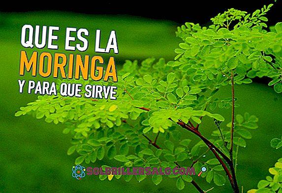 Hierba del Manso: ประโยชน์ข้อห้ามใช้และวิธีการใช้