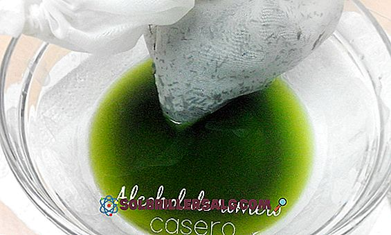 En Yaygın 50 Şifalı Bitki ve Kullanım Alanları