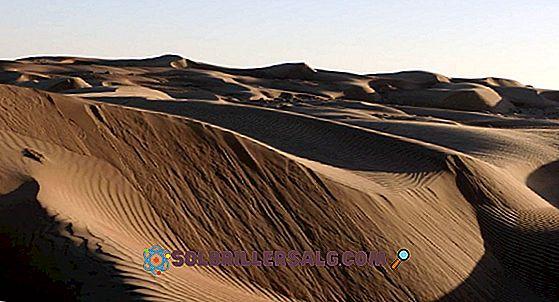 صحراء المحيط الهادئ: الخصائص والموقع والمناخ والنباتات والحيوانات