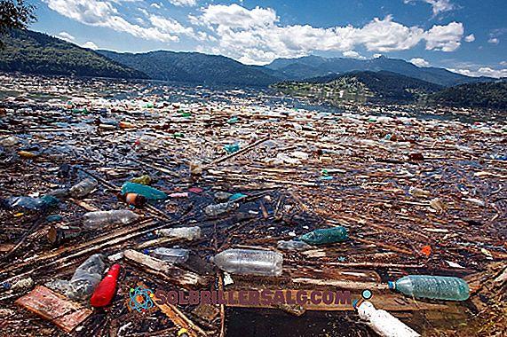 11 Cause e conseguenze dell'inquinamento idrico
