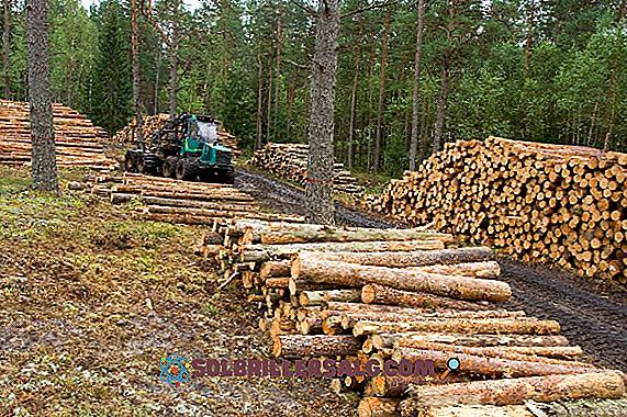 Sfruttamento delle foreste: attività primarie, tipi, conseguenze