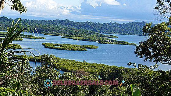 Le 5 risorse naturali più importanti di Panama