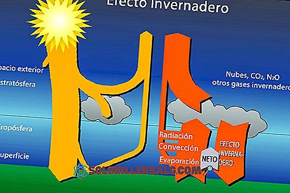 ما هو تأثير الدفيئة؟
