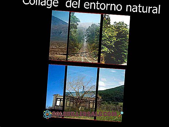 Kokie yra gamtinio kraštovaizdžio elementai?