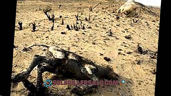 Le 3 cause e conseguenze dell'inquinamento del suolo principale