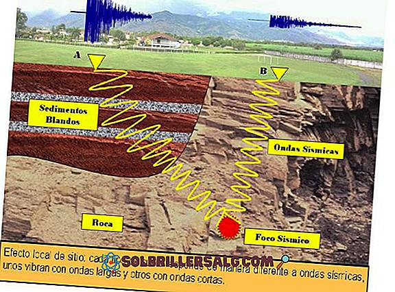 التربة الصخرية: الخصائص الرئيسية