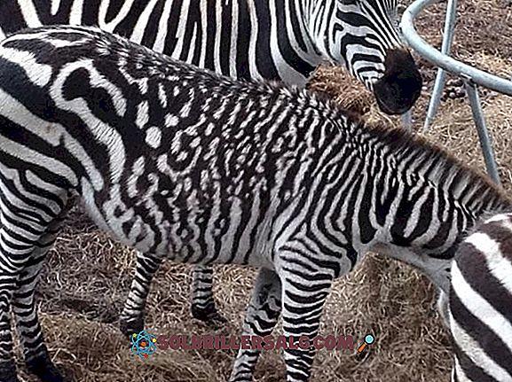 20 حيوانات أجنبية جنسية رائعة وخصائصها