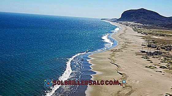 Kaldhavet av den peruanske strømmen: egenskaper, årsaker, betydning