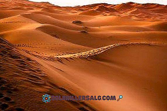 النظام البيئي الصحراوي الخصائص والأنواع والنباتات والحيوانات 2021