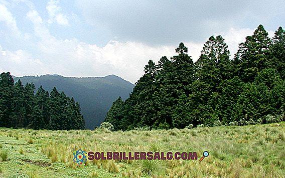Las umiarkowany: charakterystyczny, lokalizacja, flora, fauna, klimat
