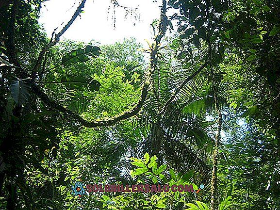 10 caratteristiche più importanti della giungla