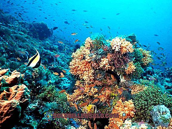 Tło morskie: charakterystyka, relief, rodzaje, flora i fauna