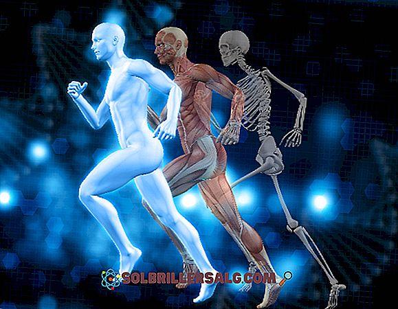 Неврохипофиза: развитие, функциониране, анатомия и заболявания