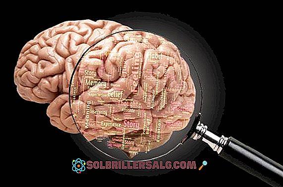 creșterea creierului pierdere în greutate