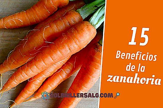 nutrizione - 15 benefici della carota per la salute