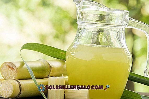 17 proprietà sorprendenti della canna da zucchero per la salute