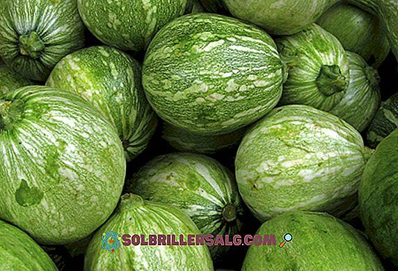 näring - 11 Otroliga fördelar med Zapallo för hälsa