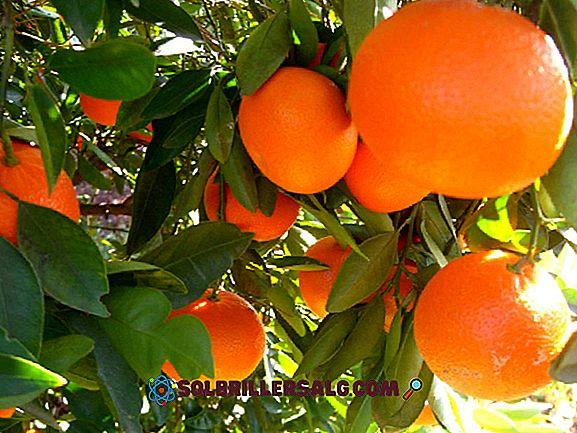 16 Beneficii de mandarină pentru sănătate