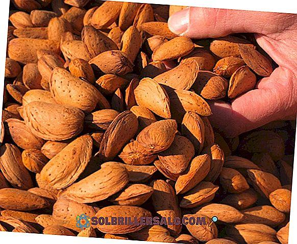 nutrizione - 15 benefici spettacolari di mandorle per la salute