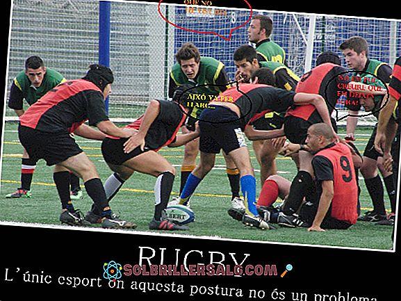 85 Frasa Rugby Terbaik