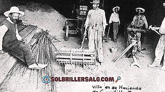 Le 65 migliori frasi di Pancho Villa (Doroteo Arango)
