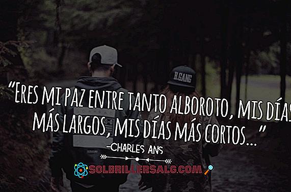 De 33 bästa fraserna av Charles Ans