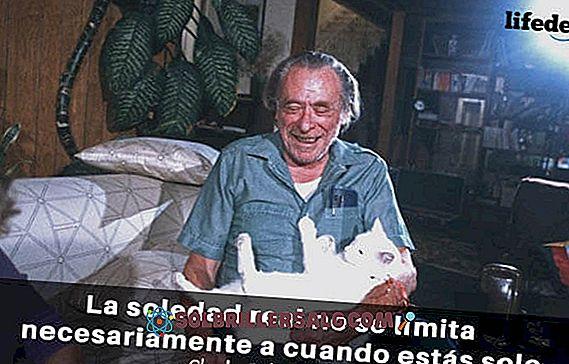 As 100 Melhores Frases De Charles Bukowski