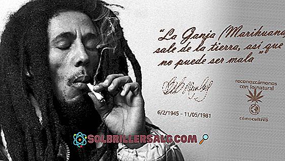Le 71 migliori frasi di Reggae e Rastafari