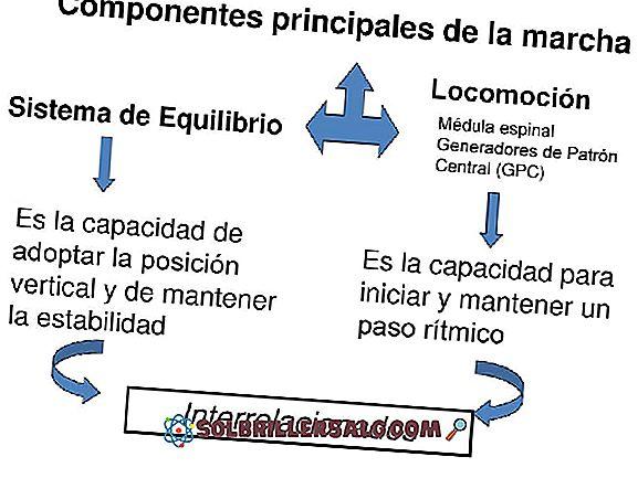 technologijos - 7 informacinės sistemos komponentai