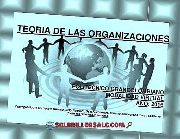 Psikologi Organisasi: Karakteristik, Teori dan Fungsi